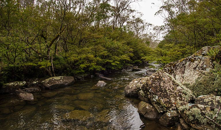 River walking track - Accommodation Cairns