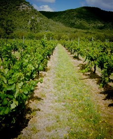 Gartelmann Wines - Accommodation Cairns