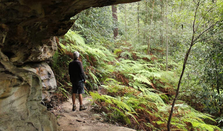 Dharug National Park - Accommodation Cairns