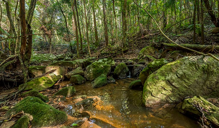 Palm Grove Nature Reserve - Accommodation Cairns