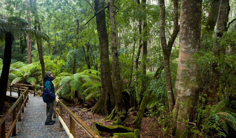 Monga National Park - Accommodation Cairns