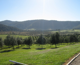 Hastings Valley Olives - Accommodation Cairns