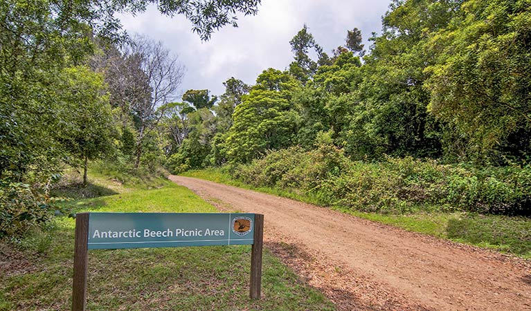 Antarctic Beech picnic area - Accommodation Cairns