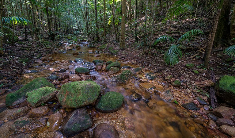 Starrs Creek picnic area - Accommodation Cairns