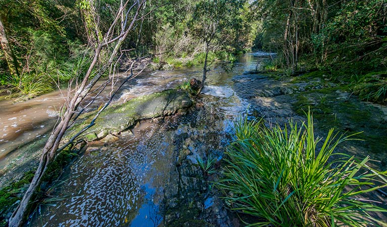 Dawson River walking track - Accommodation Cairns