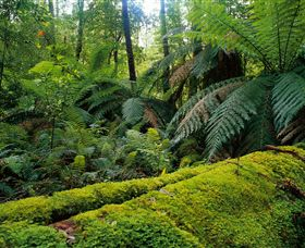 Errinundra National Park