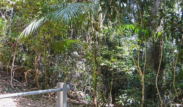 Goorgana walking track - Accommodation Cairns