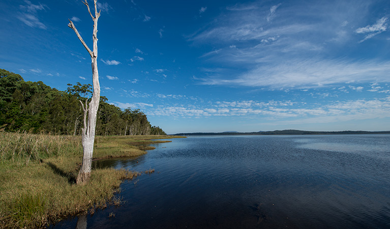 Lake Innes Nature Reserve - Accommodation Cairns