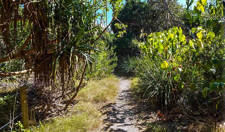 North Head walking track - Accommodation Cairns