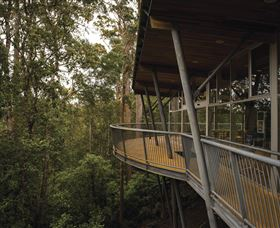 Tarkine Forest Adventures - Dismal Swamp - Accommodation Cairns