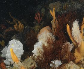 Point Hicks Marine National Park