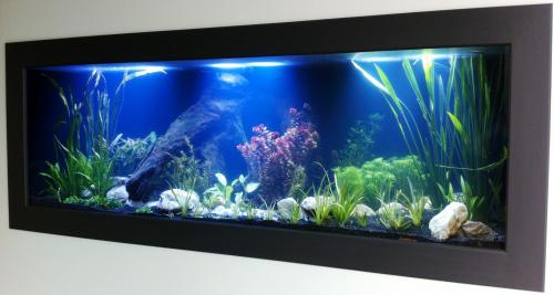 Aquariums in Cairns - Accommodation Cairns