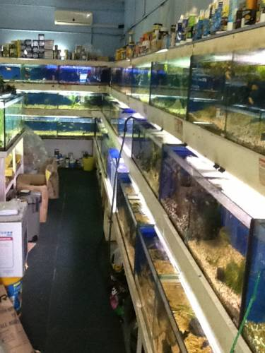 Clearwater Aquariums - Accommodation Cairns