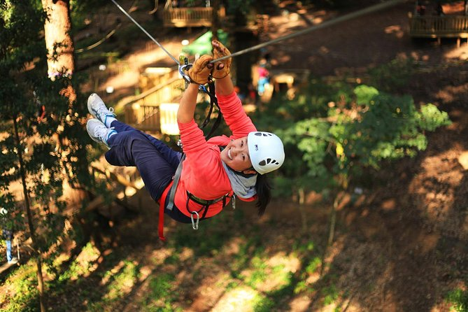 Trees Adventure Lane Poole Park - Treetop  Zipline Experience - Accommodation Cairns