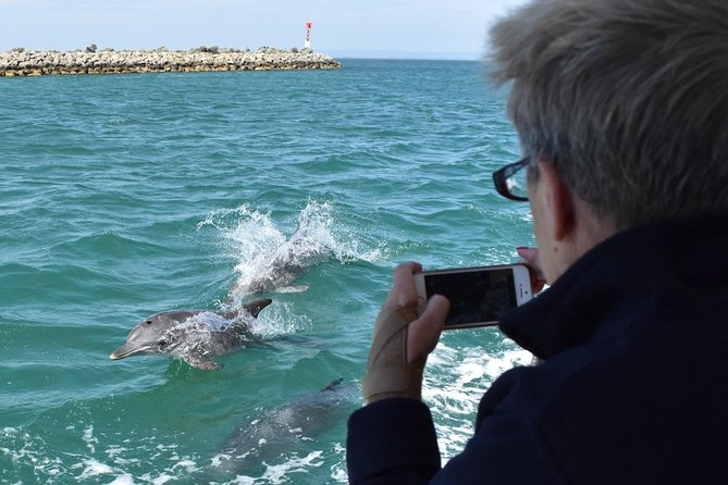 Mandurah Dolphin Island Adventure - Accommodation Cairns
