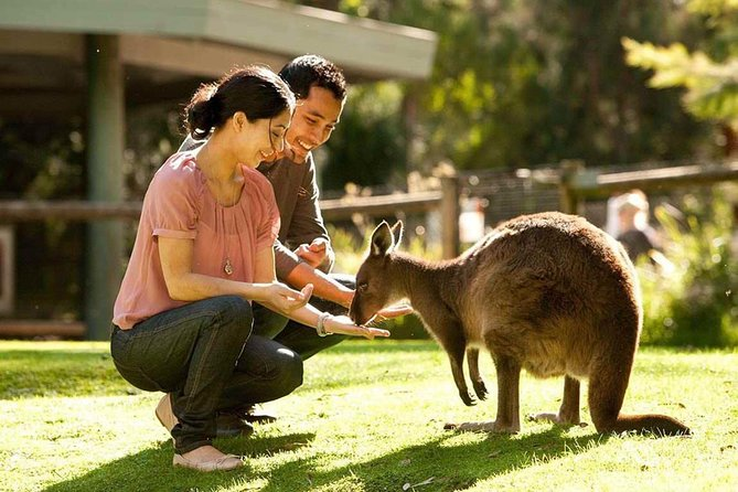 Very Best of Perth Tour - Wildlife Park  City Highlights Tour - Accommodation Cairns