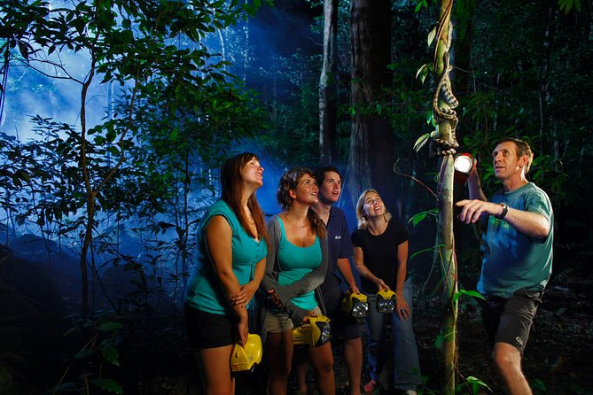 Daintree Rainforest Night Walk from Cape Tribulation - Accommodation Cairns