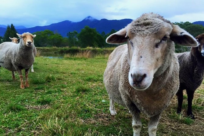 Trevena Glen Farm Animal Experience - Accommodation Cairns