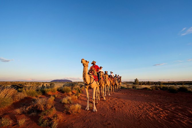 Uluru Camel Express Sunrise or Sunset Tours - Accommodation Cairns