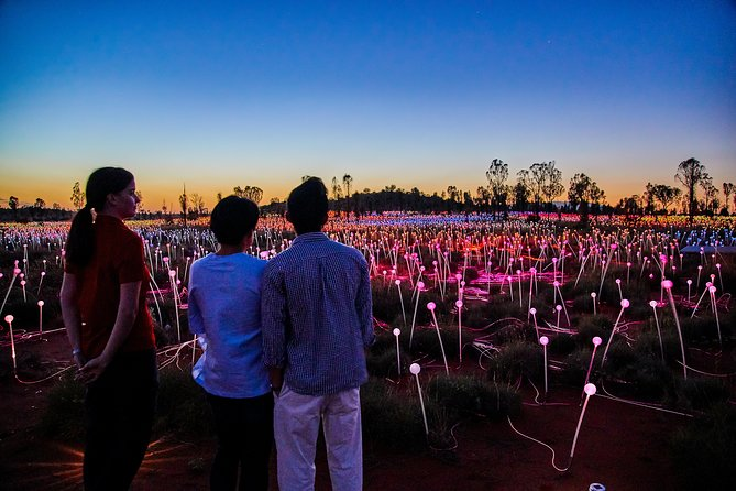 Uluru Field of Light Sunrise Tour - Accommodation Cairns
