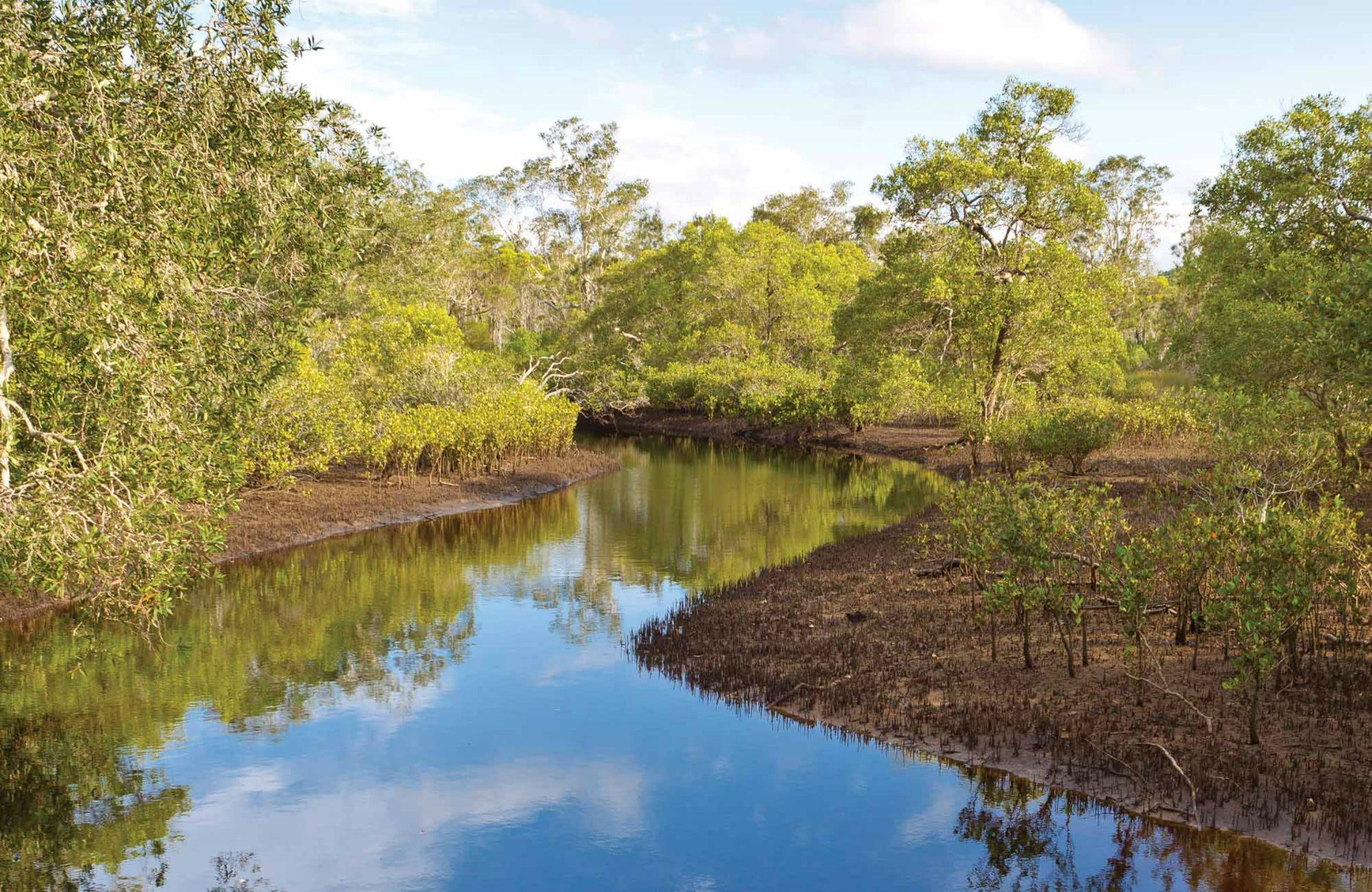 Canoe Evans River Paddle Route - Accommodation Cairns