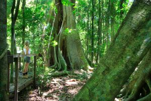 Mary Cairncross Scenic Reserve - Accommodation Cairns