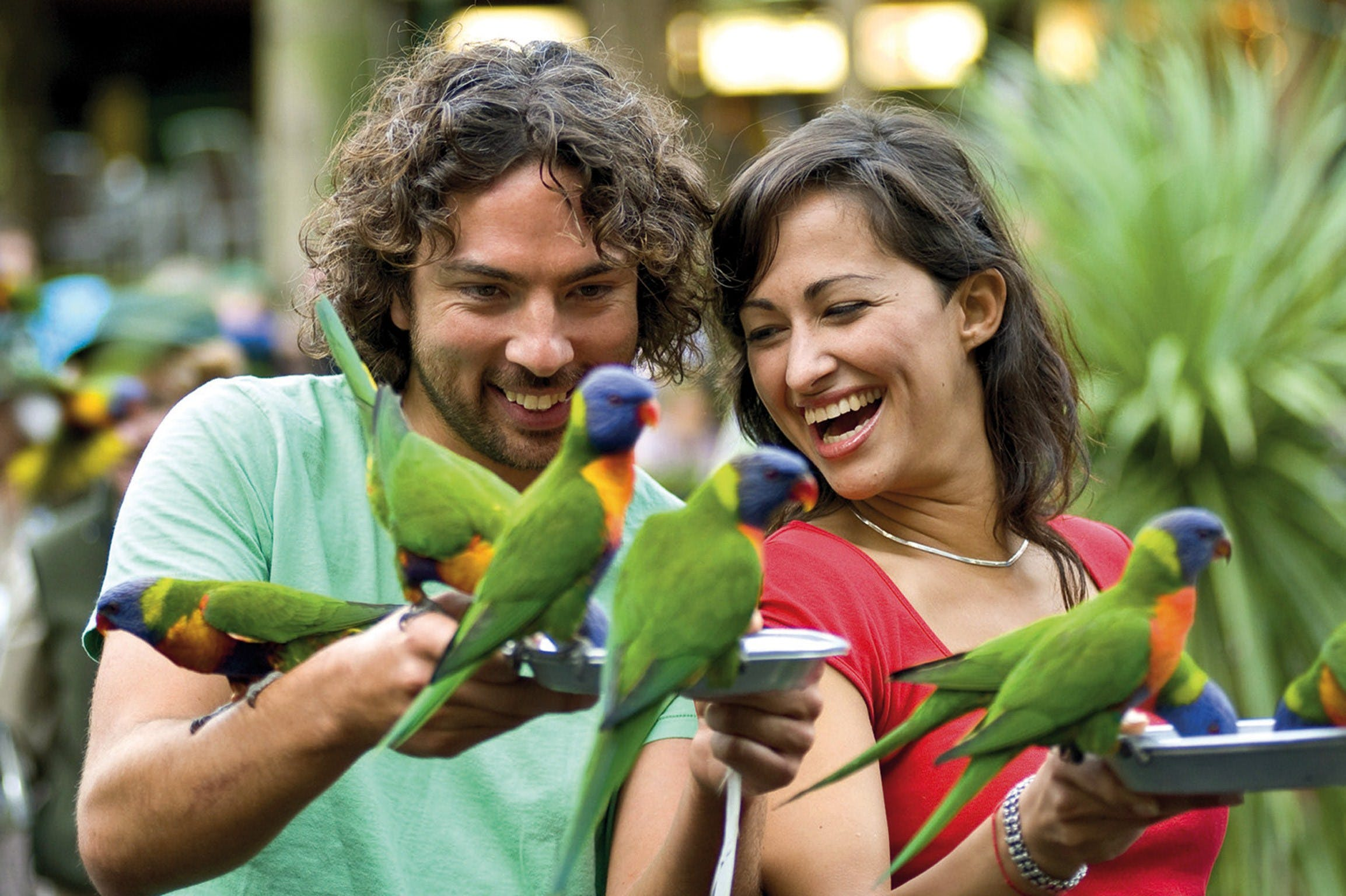 Currumbin Wildlife Sanctuary - Accommodation Cairns