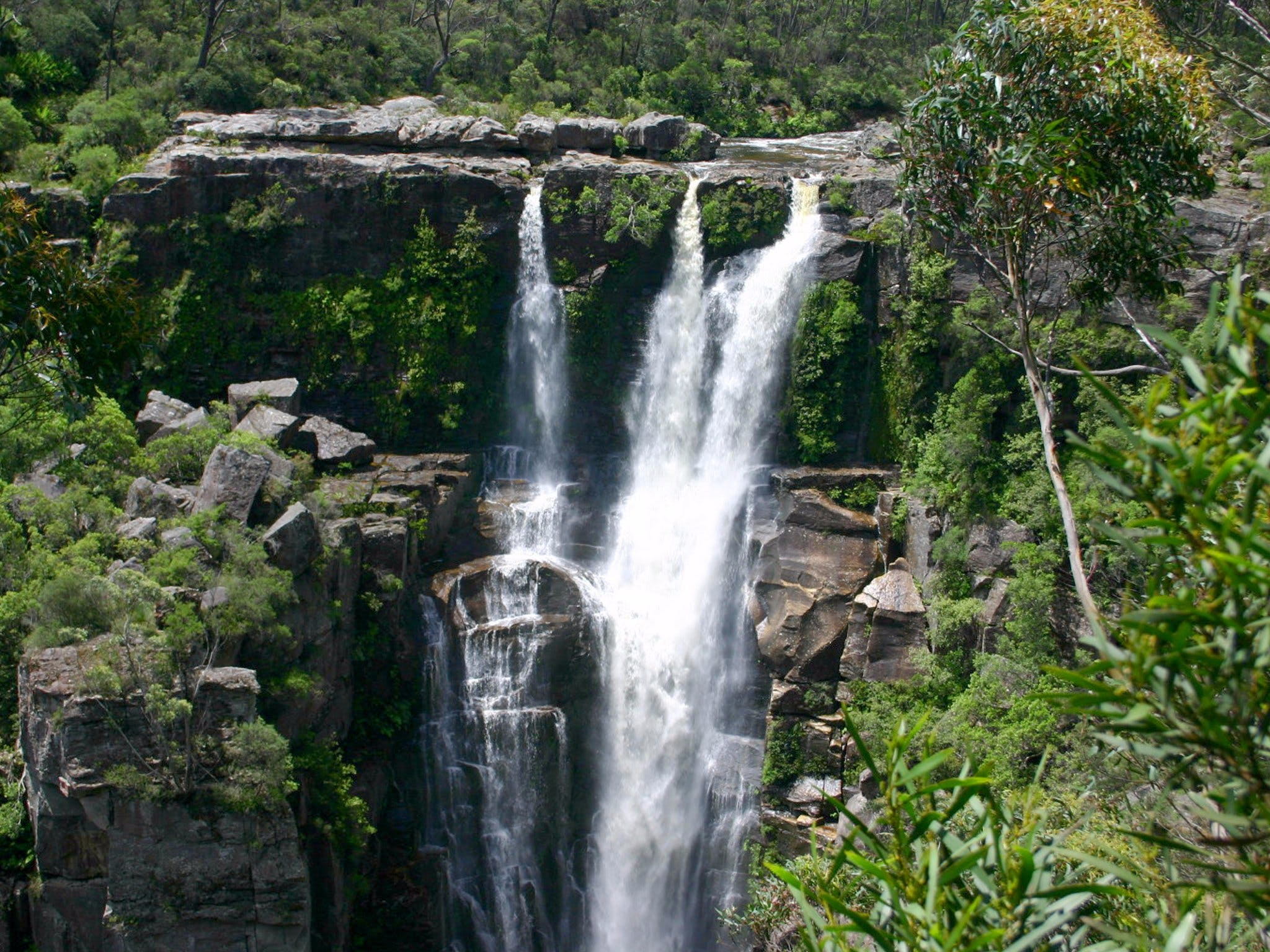 Carrington Falls - Accommodation Cairns