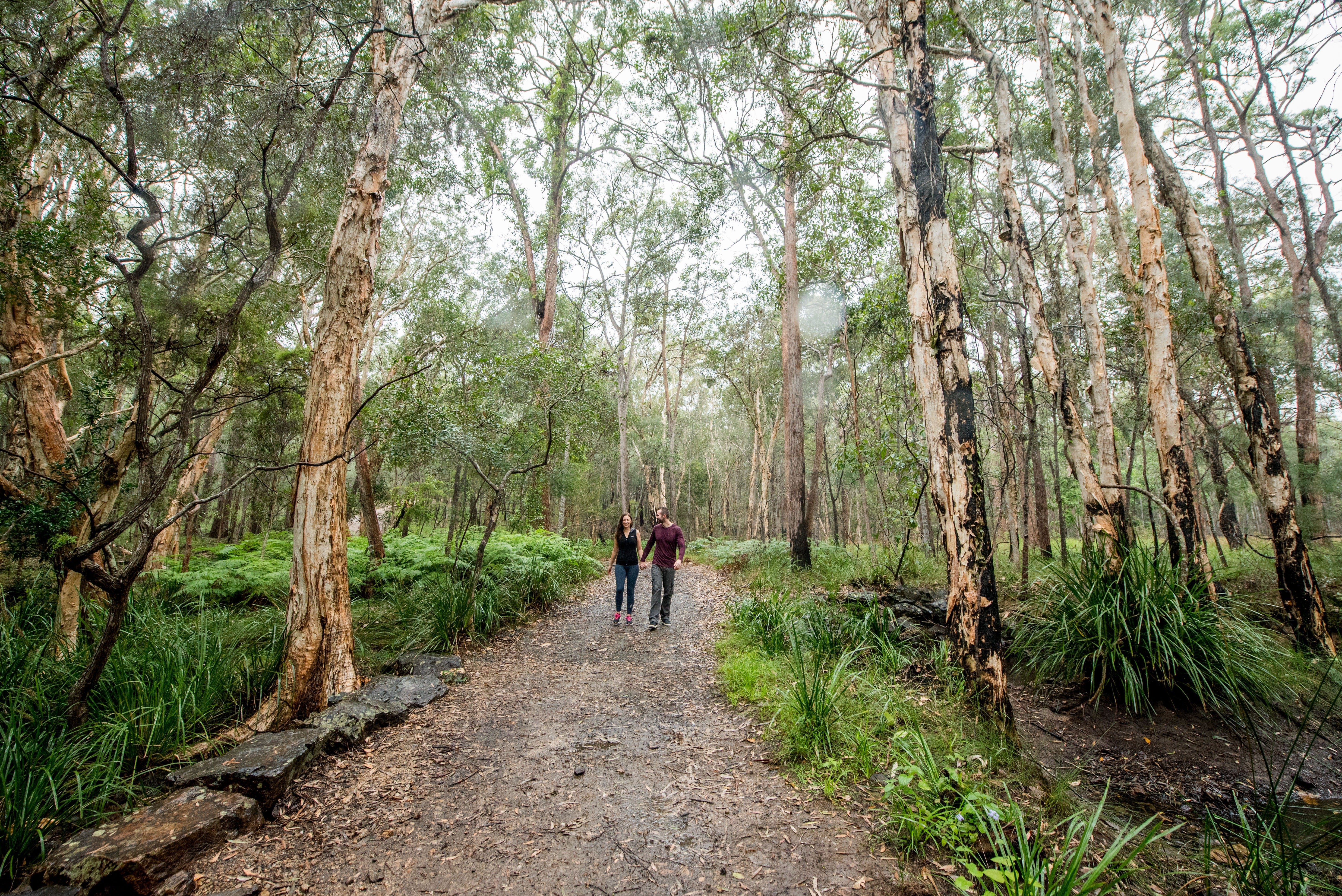 Venman Bushland National Park - Accommodation Cairns