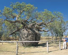 Boab Prison Tree - Accommodation Cairns