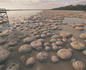 Lake Clifton Thrombolites - Accommodation Cairns