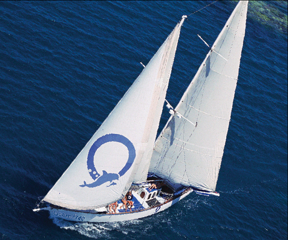 Ocean Free  Ocean Freedom - Cairns Premier Reef and Island Tours - Accommodation Cairns