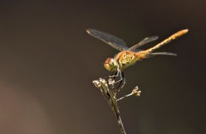 Dragonfly Discovery - Accommodation Cairns