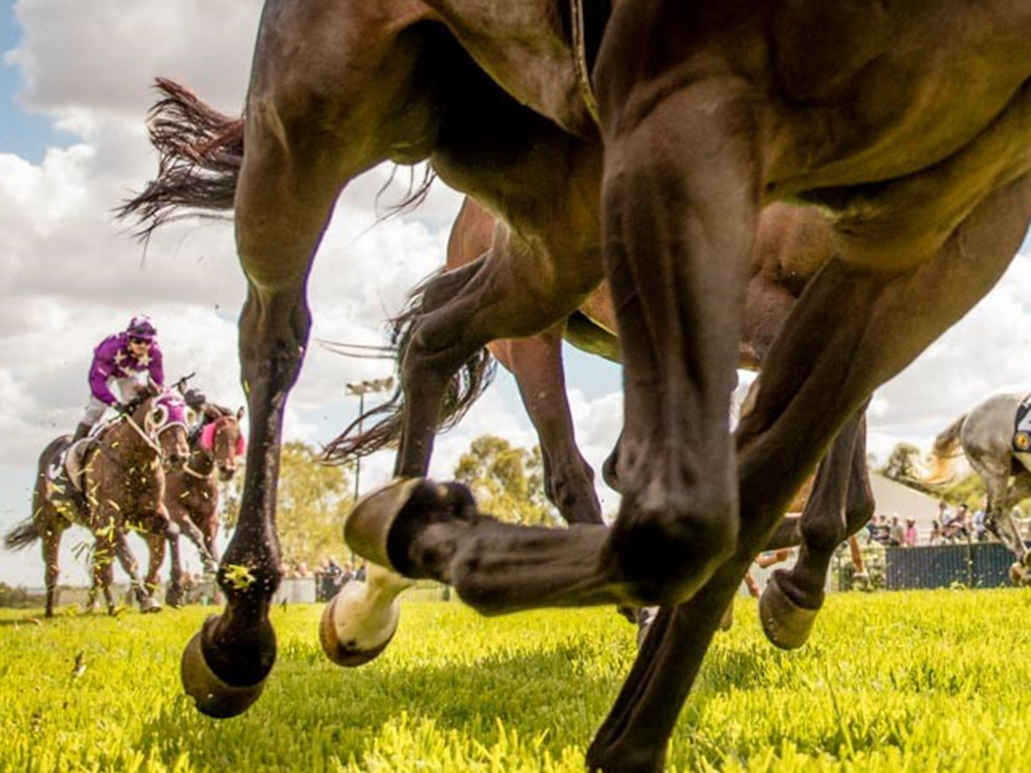 Night Markets and Race Day - Accommodation Cairns