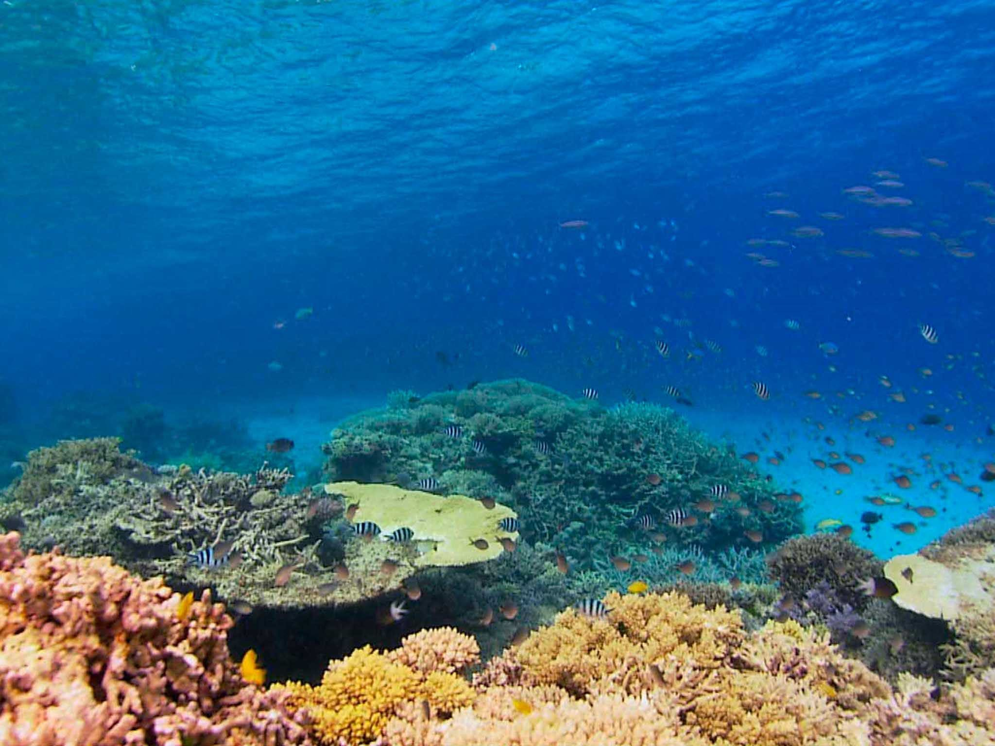 Recovery of the Great Barrier Reef - Accommodation Cairns