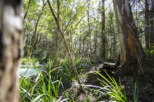 Bottlebutt Bash Trail Run - Accommodation Cairns