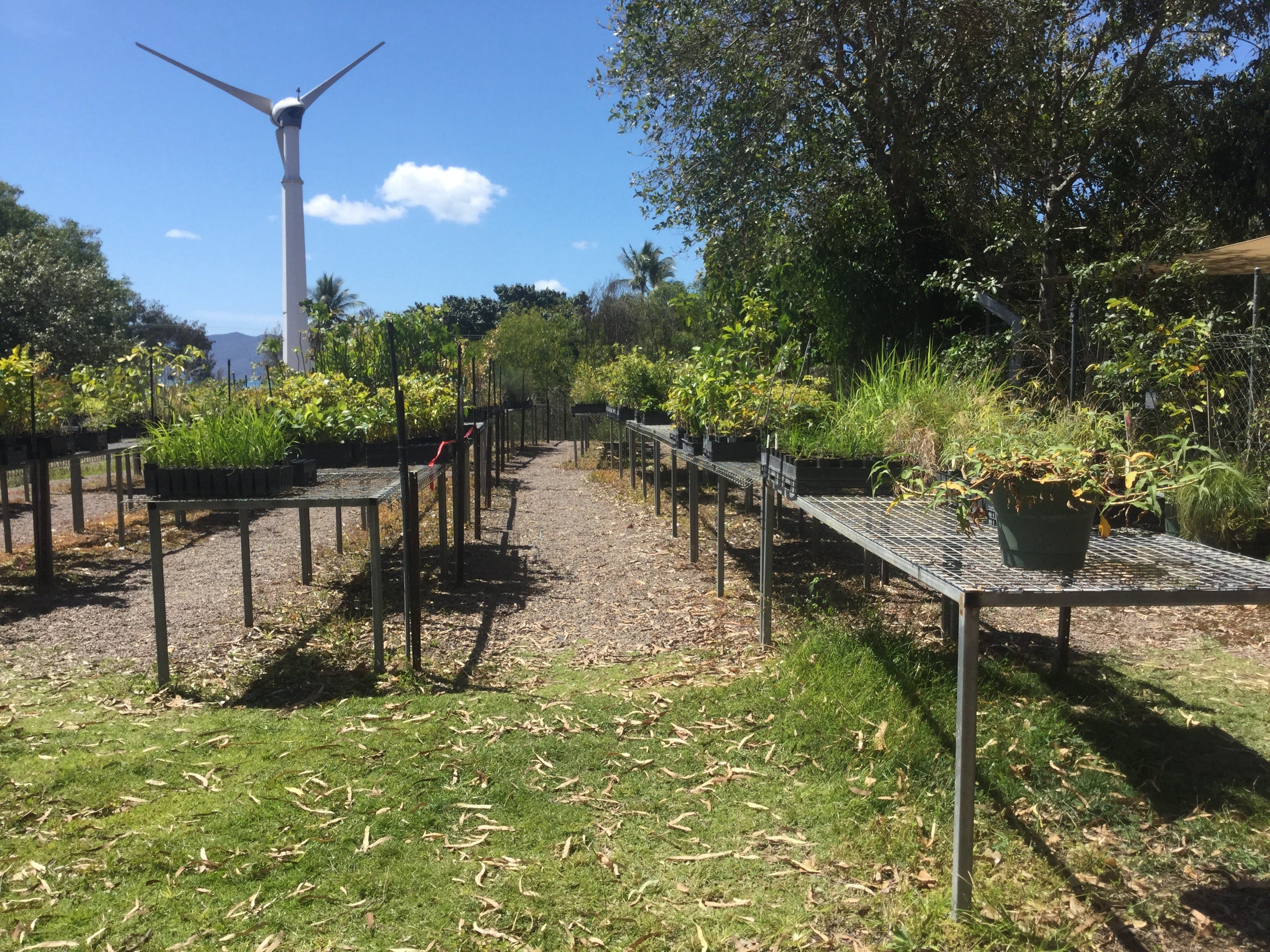Conservation Volunteers Australia Townsville - Ocean View Nursery - Accommodation Cairns