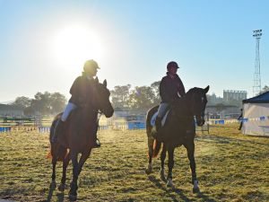 Gunnedah Showjumping Festival - Accommodation Cairns