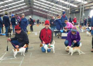 Hamilton Jack Russell Terrier and Hunting Dog Show - Accommodation Cairns